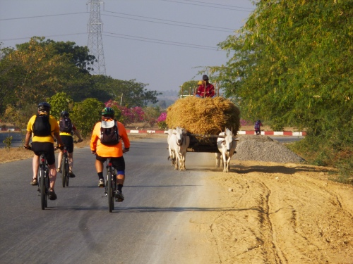 Hay cart and cyclists